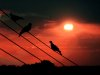 Birds on a wire 01