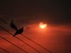 Birds on a wire 04